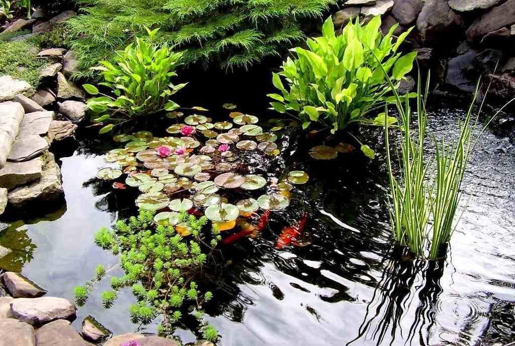 Очищення водойми за допомогою торфу